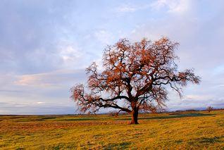 Winter Tree Internet 18.jpg