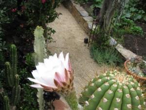 cactiwflower2