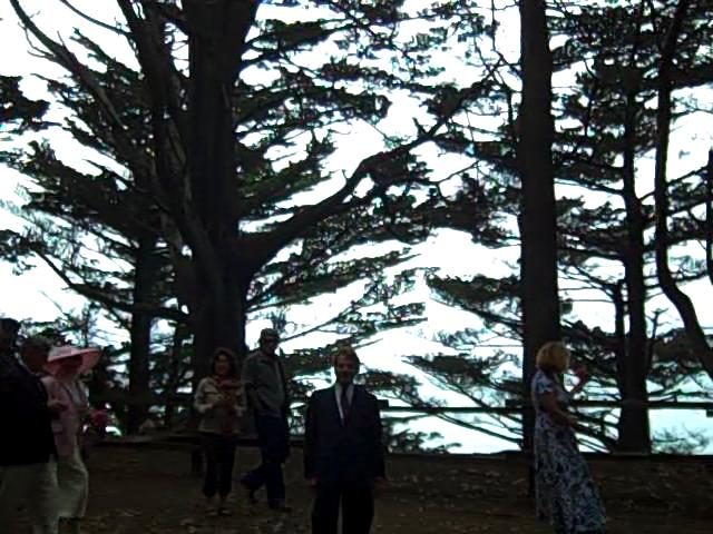 TreesMB